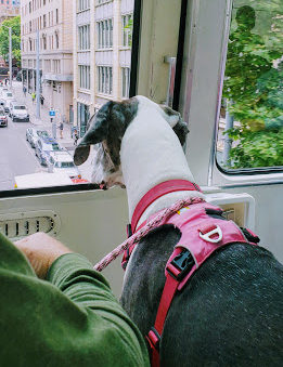Maggie on the Monorail